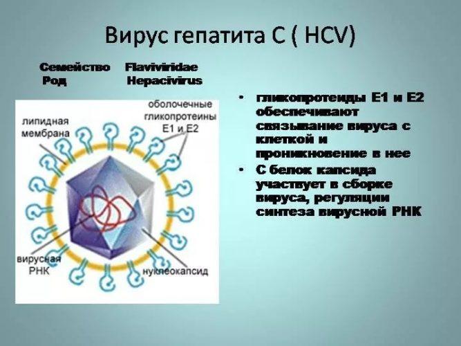 Генотипы вируса гепатита С