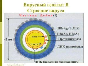 Гепатит b hbsag как лечить