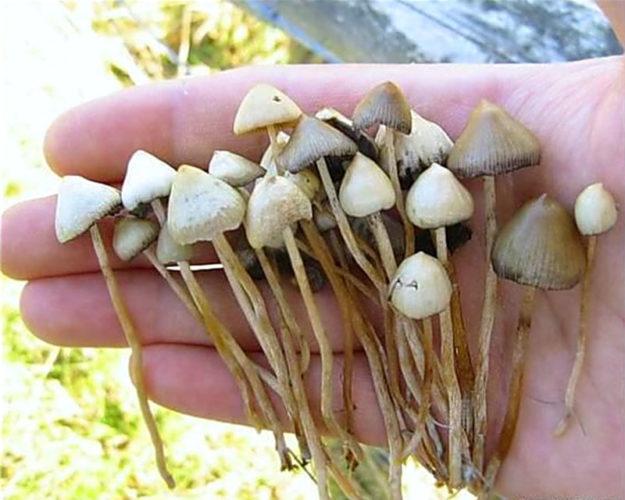 где располагаются грибы